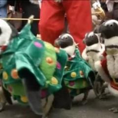 Pinguïns verkleed in de kerstsfeer