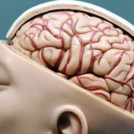 Hoe werken de hersenen