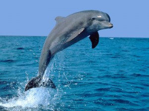 dolfijn2