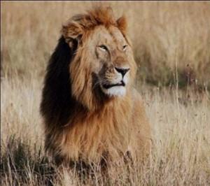 leeuw.1